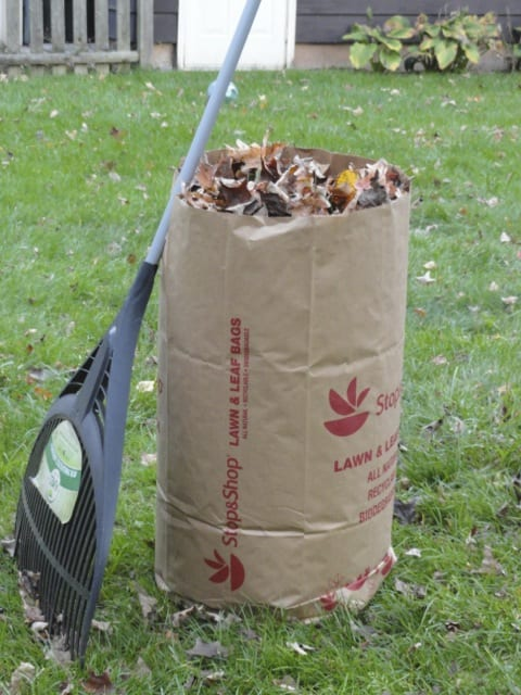 Image result for images of bags of leaves