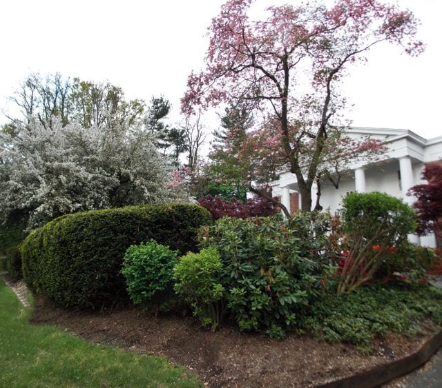 Spring at 1161 Prospect Ave. (Source: Allan Mayer)