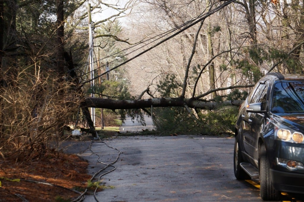 West Hartford Cleans Up After Overnight Storm Downs Trees ...