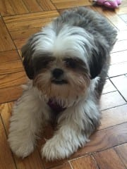 Daisy is the studio mascot at STARR YOGA. Courtesy of Julie Starr