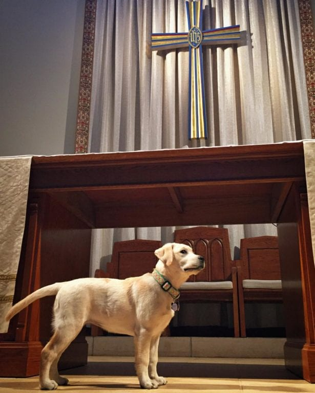 Rector Bob Hooper's new dog Lilly is ready for the Blessing of the Animals at St. James West Hartford. Submitted photo