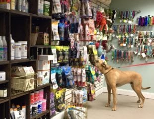 Jackson 'shops' for some of his favorite products at Dogology, which opened Nov. 15 on Sedgwick Road. Photo credit: Ronni Newton