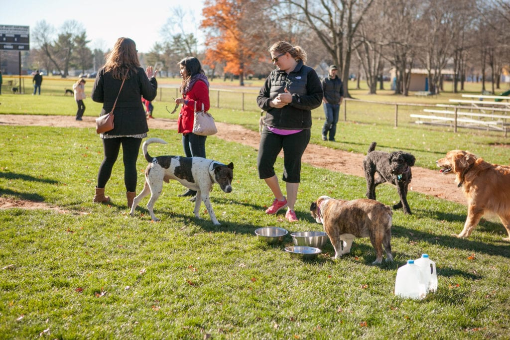 West Hartford Pop-Up Dog Park at Eisenhower Park. Nov. 19, 2016. Photo courtesy of West Hartford Dog Park Coalition