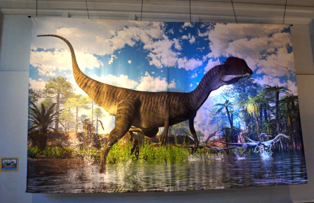 Large graphics created by James Kuether hang on the walls of the new dinosaur exhibit at the Children's Museum in West Hartford. Photo credit: Ronni Newton