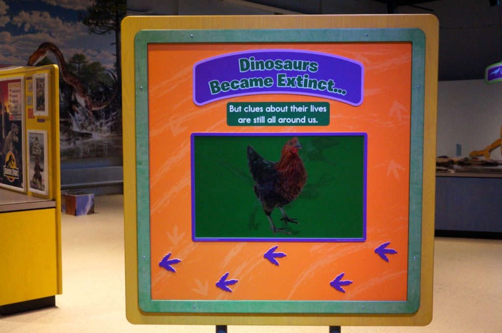 Dinosaurs in Your Backyard: A Portal to Past Worlds exhibit. The Children's Museum, West Hartford. Photo credit: Ronni Newton