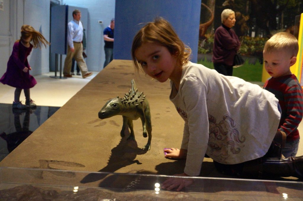 Scutellosaurus was smaller than a young child. Dinosaurs in Your Backyard: A Portal to Past Worlds exhibit. The Children's Museum, West Hartford. Photo credit: Ronni Newton