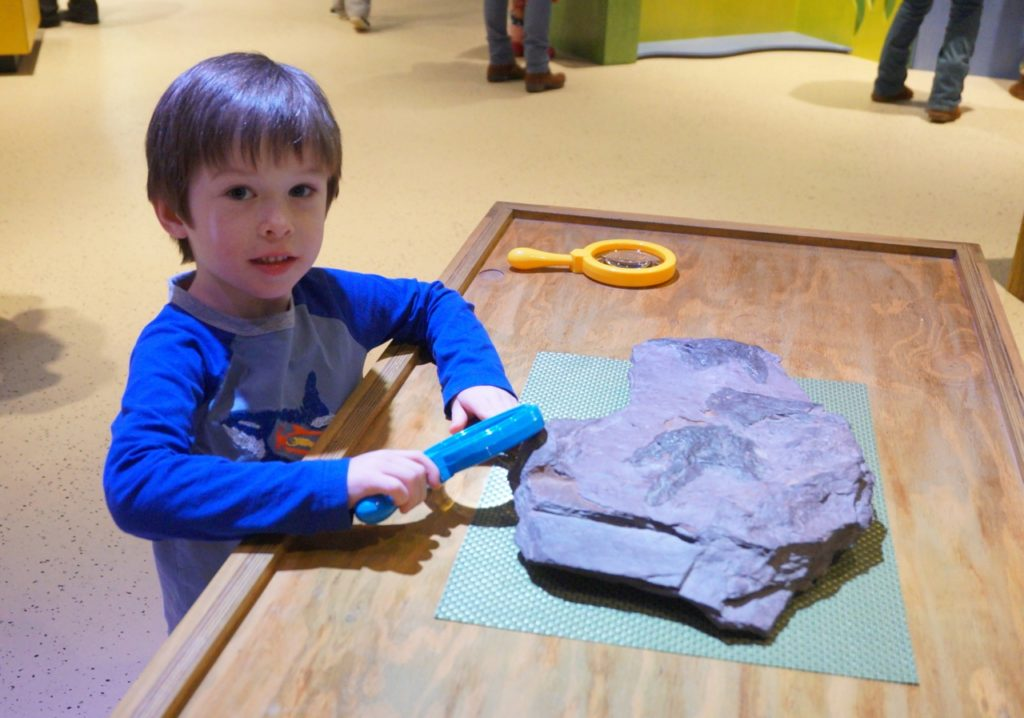 A young visitor to the Children's Museum's new dinosaur exhibit inspects a fossil. Photo credit: Ronni Newton