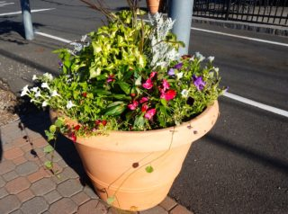 The Knox Foundation will be providing planters in Bishops Corner this spring and summer. Photo credit: Ronni Newton