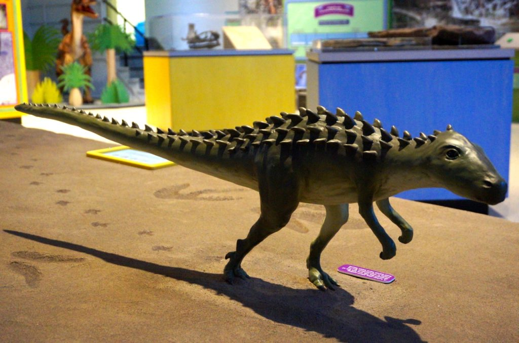 The replica of the petite Scutellosaurus is true-to-size. Dinosaurs in Your Backyard: A Portal to the Past exhibit. The Children's Museum, West Hartford. Photo credit: Ronni Newton