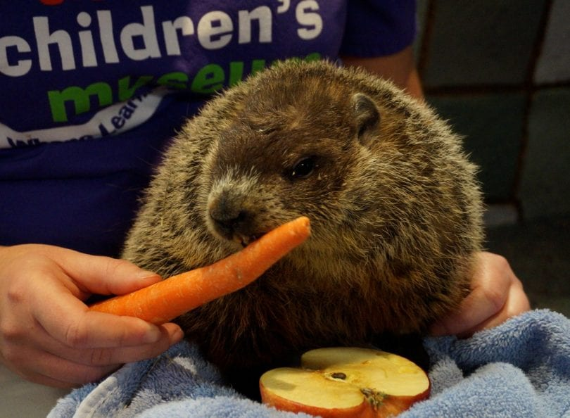 West Hartford's Groundhog to Make Prediction on Friday - We